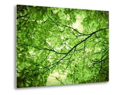 Foliage Tree, Branches, Branches, Leaves, Green-Alaya Gadeh-Metal Print