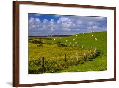 Germany, Schleswig-Holstein, North Frisia, 'Husumer Bucht' (Bay), Husum, Dockkoog, Dyke, Sheeps-Udo Siebig-Framed Photographic Print