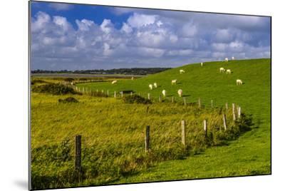 Germany, Schleswig-Holstein, North Frisia, 'Husumer Bucht' (Bay), Husum, Dockkoog, Dyke, Sheeps-Udo Siebig-Mounted Photographic Print