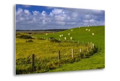 Germany, Schleswig-Holstein, North Frisia, 'Husumer Bucht' (Bay), Husum, Dockkoog, Dyke, Sheeps-Udo Siebig-Metal Print