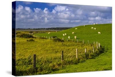 Germany, Schleswig-Holstein, North Frisia, 'Husumer Bucht' (Bay), Husum, Dockkoog, Dyke, Sheeps-Udo Siebig-Stretched Canvas Print