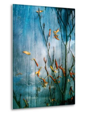 Collected Plants and Gerber Daisy Petals on a Wooden Sky Background-Alaya Gadeh-Metal Print