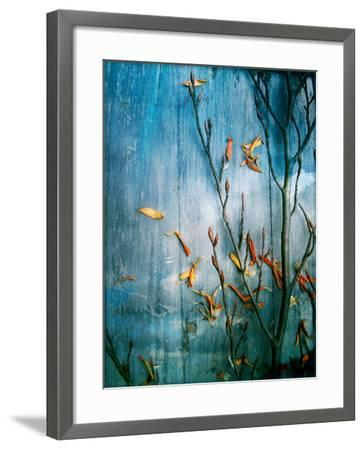 Collected Plants and Gerber Daisy Petals on a Wooden Sky Background-Alaya Gadeh-Framed Photographic Print