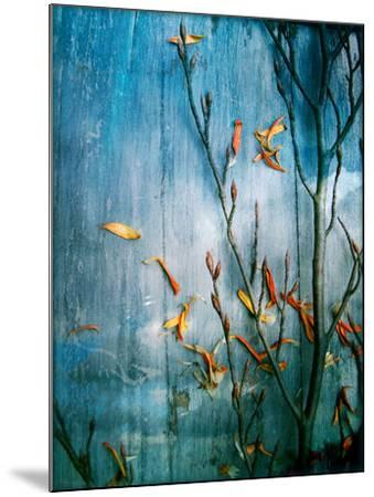 Collected Plants and Gerber Daisy Petals on a Wooden Sky Background-Alaya Gadeh-Mounted Photographic Print