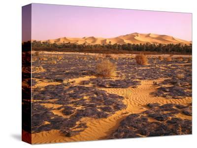 Nordafrika, Sahara, Saoura-Tal, Kalkstein, Vegetation, Sanddv¼nen, Wv¼ste-Thonig-Stretched Canvas Print