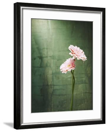 Gerbera, Flowers, Blossoms, Pink, Still Life-Axel Killian-Framed Photographic Print