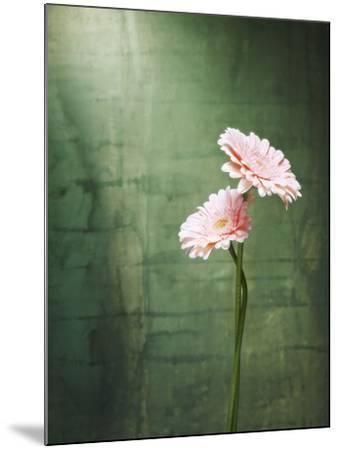 Gerbera, Flowers, Blossoms, Pink, Still Life-Axel Killian-Mounted Photographic Print