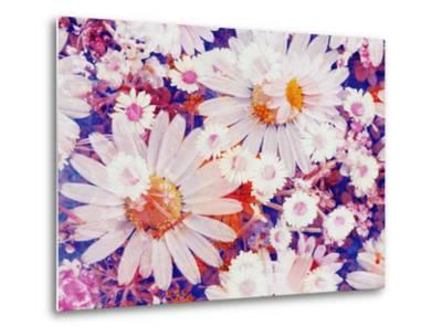 Composing with Marguerites and Daisies-Alaya Gadeh-Metal Print