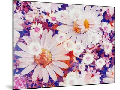 Composing with Marguerites and Daisies-Alaya Gadeh-Mounted Photographic Print