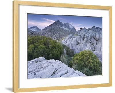 Spain, Majorca, Serra De Tramuntana, Puig Major, Puig De Ses Vinyes, Col De Cals Reis, Rock, Shrubs-Rainer Mirau-Framed Photographic Print