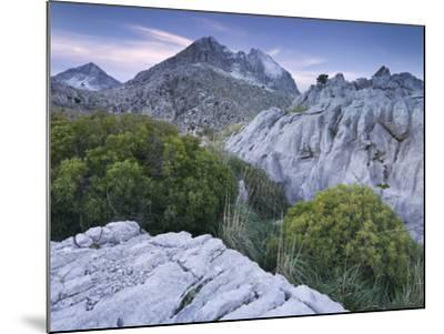 Spain, Majorca, Serra De Tramuntana, Puig Major, Puig De Ses Vinyes, Col De Cals Reis, Rock, Shrubs-Rainer Mirau-Mounted Photographic Print