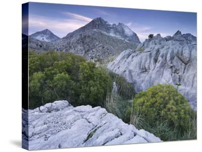 Spain, Majorca, Serra De Tramuntana, Puig Major, Puig De Ses Vinyes, Col De Cals Reis, Rock, Shrubs-Rainer Mirau-Stretched Canvas Print