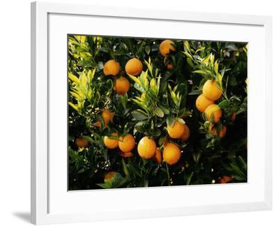 France, Provence, Rhone Valley, Wine Palace 'Chateau Les Fines Roches'-Thonig-Framed Photographic Print
