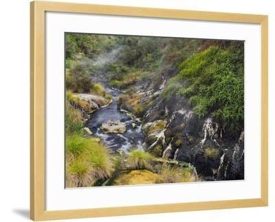 Hot Springs, Waimangu Volcanic Valley, Rotorua, Bay of Plenty, North Island, New Zealand-Rainer Mirau-Framed Photographic Print
