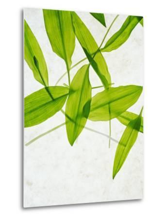 Wild Garlic, Allium Ursinum, Leaves, Green-Axel Killian-Metal Print