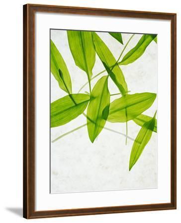 Wild Garlic, Allium Ursinum, Leaves, Green-Axel Killian-Framed Photographic Print