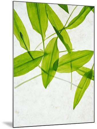 Wild Garlic, Allium Ursinum, Leaves, Green-Axel Killian-Mounted Photographic Print