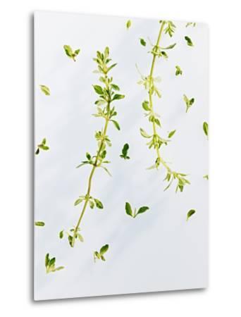 Thyme, Thymus Vulgare, Twigs, Leaves, Green-Axel Killian-Metal Print