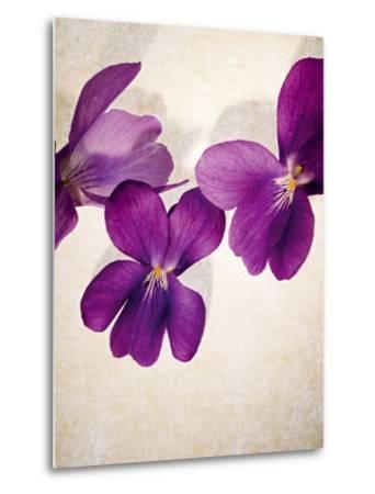 Sweet Violets, Violets, Viola Odorata, Blossoms, Violet-Axel Killian-Metal Print