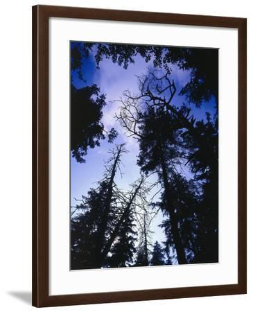 Beech Forest, Summer-Thonig-Framed Photographic Print