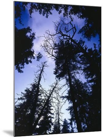 Beech Forest, Summer-Thonig-Mounted Photographic Print