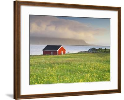 Norway, Northern Country, Lofoten, Gimsoya, Meadow, Hut-Rainer Mirau-Framed Photographic Print