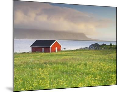 Norway, Northern Country, Lofoten, Gimsoya, Meadow, Hut-Rainer Mirau-Mounted Photographic Print