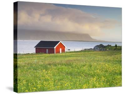 Norway, Northern Country, Lofoten, Gimsoya, Meadow, Hut-Rainer Mirau-Stretched Canvas Print