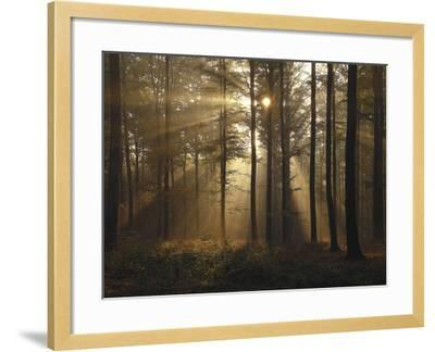 Africa, Sahara, Stone Desert, Reg-Thonig-Framed Photographic Print