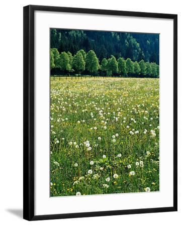 Netherlands, Lisse, Tulip Field-Thonig-Framed Photographic Print