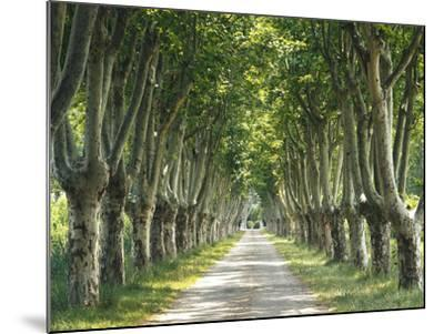 Plane Trees, Avenue-Thonig-Mounted Photographic Print