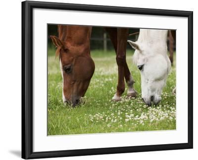 Horses, Meadow, Graze-S. Uhl-Framed Photographic Print