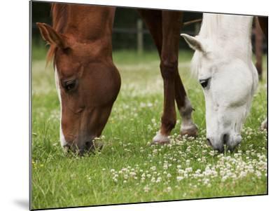 Horses, Meadow, Graze-S. Uhl-Mounted Photographic Print