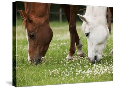 Horses, Meadow, Graze-S. Uhl-Stretched Canvas Print