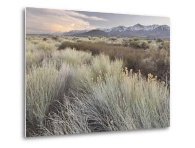 Owens River Valley, Sierra Nevada, California, Usa-Rainer Mirau-Metal Print