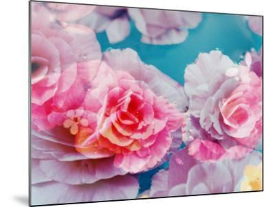 Photographic Layer Work from Blossoms in Water-Alaya Gadeh-Mounted Photographic Print