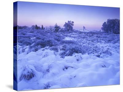 Belgium, High Fens, Hautes Fagnes, High Fens-Eifel Nature Park, Moor in Winter before Sunrise-Andreas Keil-Stretched Canvas Print