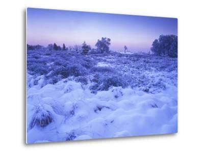 Belgium, High Fens, Hautes Fagnes, High Fens-Eifel Nature Park, Moor in Winter before Sunrise-Andreas Keil-Metal Print