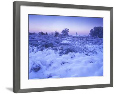 Belgium, High Fens, Hautes Fagnes, High Fens-Eifel Nature Park, Moor in Winter before Sunrise-Andreas Keil-Framed Photographic Print