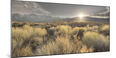 Owens River Valley, Sierra Nevada, California, Usa-Rainer Mirau-Mounted Photographic Print