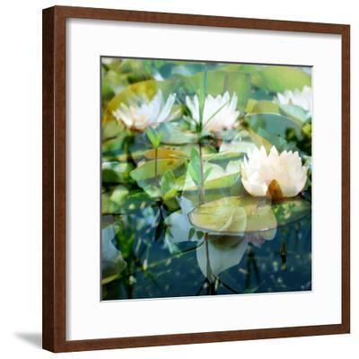 Montage of White Water Lilies-Alaya Gadeh-Framed Photographic Print