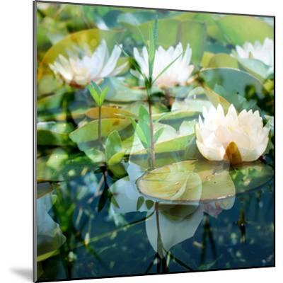 Montage of White Water Lilies-Alaya Gadeh-Mounted Photographic Print