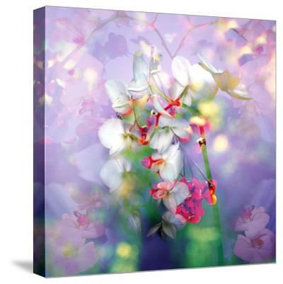 White Orchids in a Vase with Dreamy Texture-Alaya Gadeh-Stretched Canvas Print
