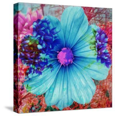 Composing with Blue Flowers-Alaya Gadeh-Stretched Canvas Print