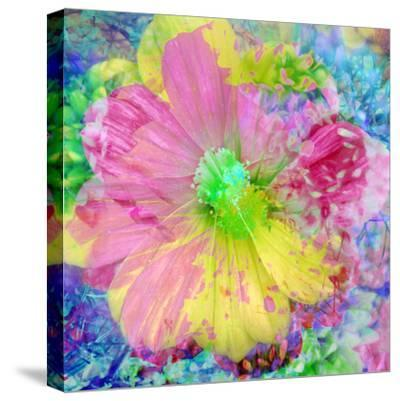 Composing with Coloured Blossoms-Alaya Gadeh-Stretched Canvas Print