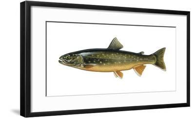 Illustration, Seesaibling, Volley-Linus Alpinus, Not Freely for Book-Industry, Series-Carl-Werner Schmidt-Luchs-Framed Photographic Print
