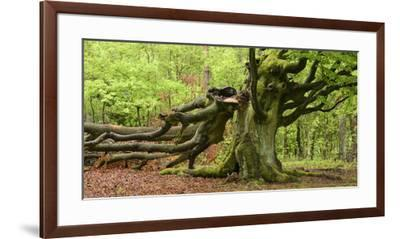 Germany, Hesse, Kellerwald-Edersee National Park, Bad Wildungen (Small Town), Halloh-Wald-Andreas Keil-Framed Premium Photographic Print