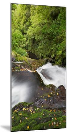 Upper Mclean Falls, Catlins, Southland South Island, New Zealand-Rainer Mirau-Mounted Photographic Print