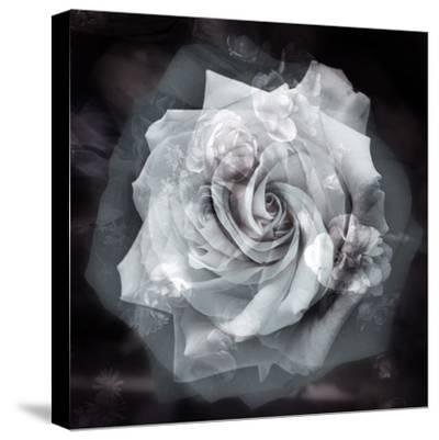 Composing of a White Rose Layered with Blossoms Infront of Black Background-Alaya Gadeh-Stretched Canvas Print