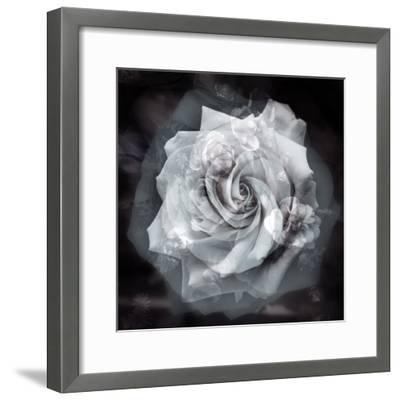 Composing of a White Rose Layered with Blossoms Infront of Black Background-Alaya Gadeh-Framed Photographic Print